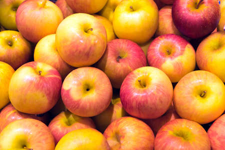 Red ripe and yellow apple background, Red and yellow apples of medium size