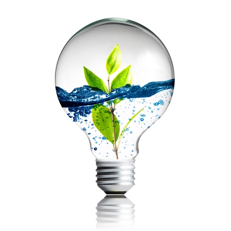 photosynthesis: green energy concept, plant growing inside the light bulb