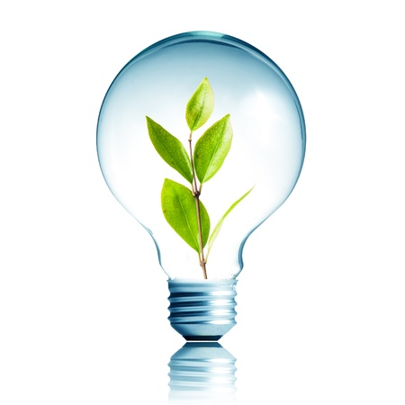 welfare plant: green energy concept, plant growing inside the light bulb