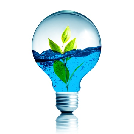 photosynthesis: green energy concept, plant growing with water inside the light bulb  Stock Photo
