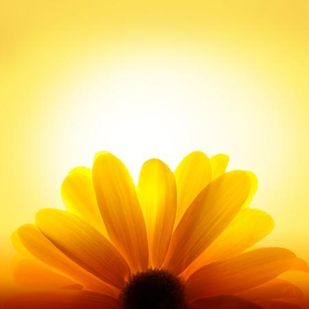 backlit: Macro-opname van zonnebloem op gele achtergrond