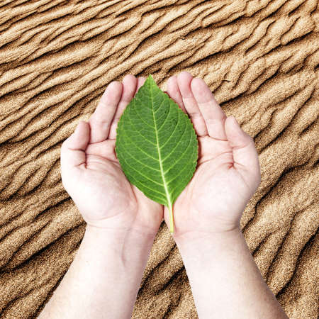 Hands holding on the green leaf on the sand desert background  Concept for planting the tree to reduce global warming Stock Photo - 12946175