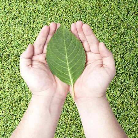 Green leaf on human hands with grass background  Concept for green earth, rebuilding earth with green energy Stock Photo - 12946174