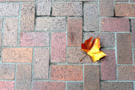 aronia: Autumn leaf on floor