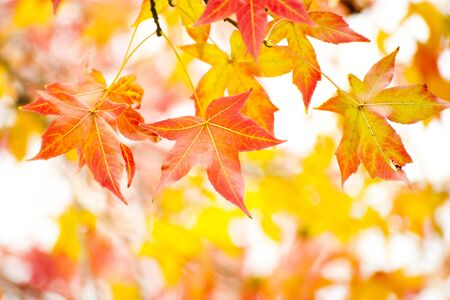 Autumn leaf Stock Photo - 15585152