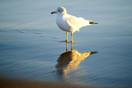 Bird standing on the ocean floor photo