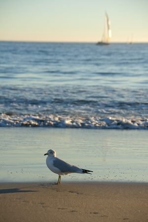 Bird standing on the ocean floor with windsurf photo