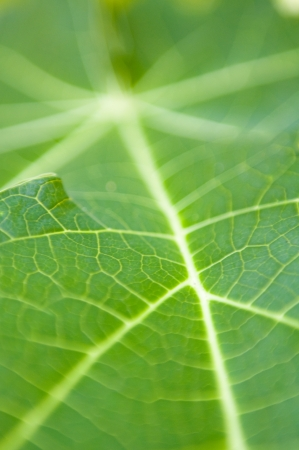 Close up on green leaf photo
