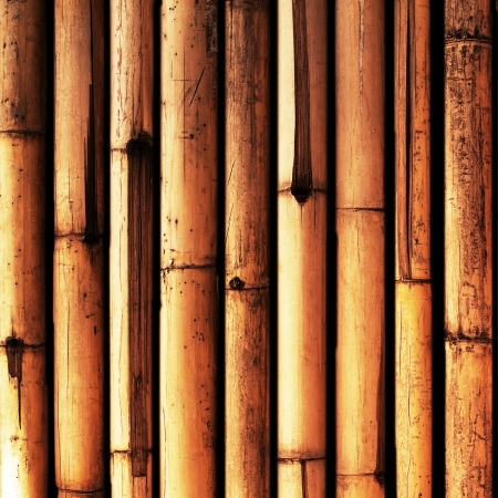 tropical border: Bamboo background