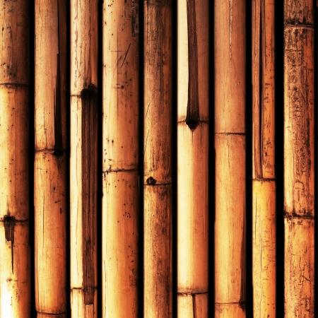 superficie: Fondo de bambú