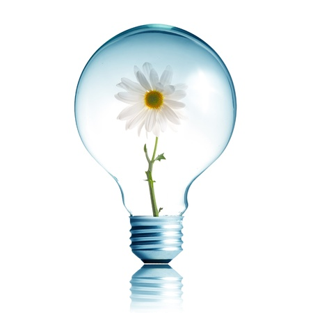 White flower growing inside the light bulb photo