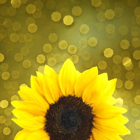 Sunflower on yellow background photo