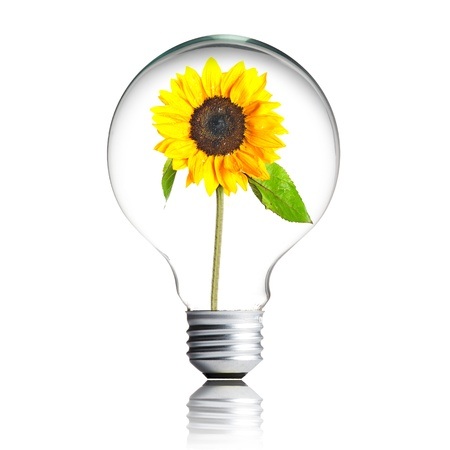 eco innovation: sunflower growing inside the light bulb