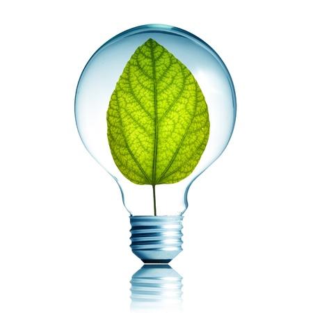 welfare plant: green energy concept, plant growing inside the light bulb