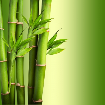 fengshui: Bamboo with beautiful green background Stock Photo