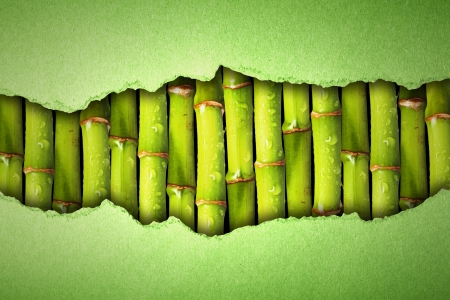 reveals: tear paper reveals the bamboo