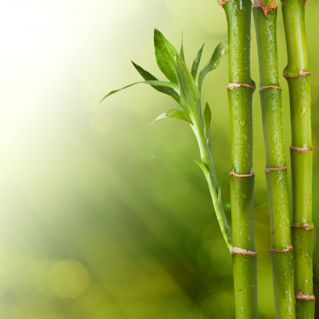 bamboo background: Bamboo with beautiful summer background with sunlight