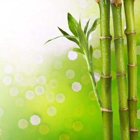 Bamboo with beautiful summer bokeh background photo