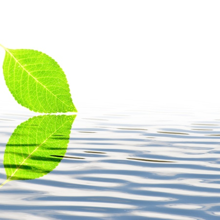 Fresh green leaf with water wave photo