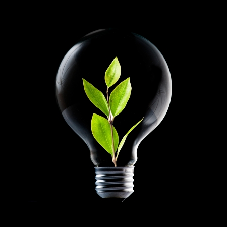 Light Bulb with soil and green plant sprout inside photo
