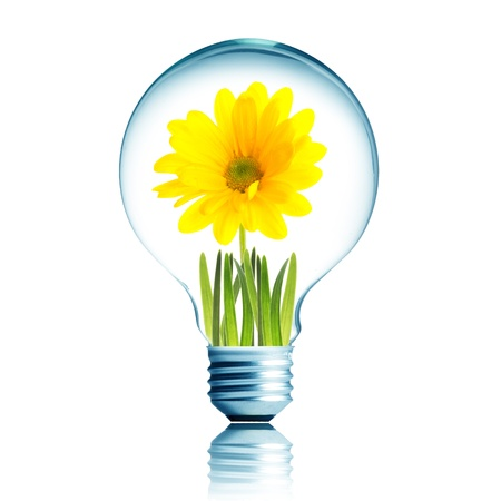 Light Bulb with soil and yellow flower plant inside photo