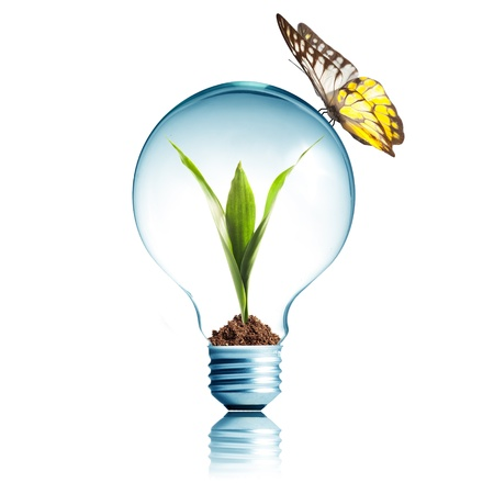 kyoto: Plant glowing inside light bulb with butterfly  Stock Photo