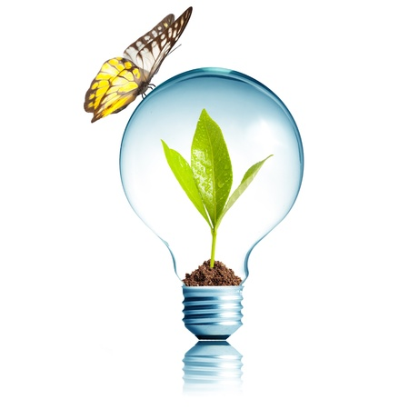 Plant glowing inside light bulb with butterfly  Stock Photo