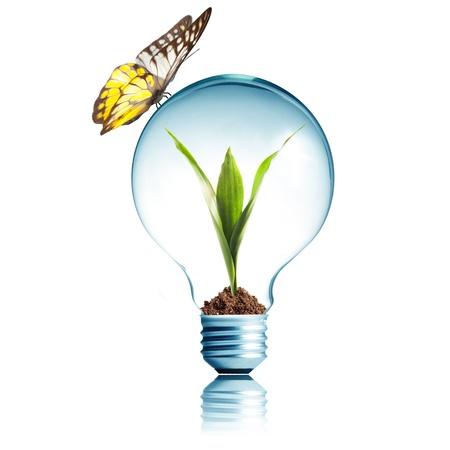 bombilla: Bombilla con el suelo y la planta brote verde en el interior