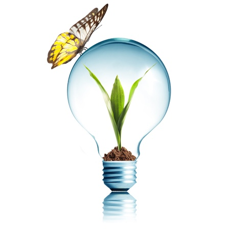 Light Bulb with soil and green plant sprout inside Stock Photo - 14684679
