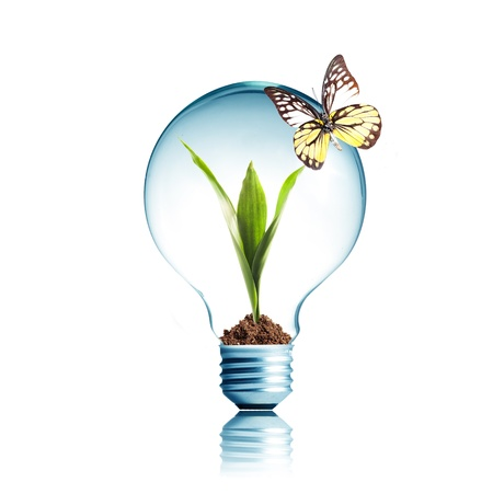 small lamp: Light Bulb with soil and green plant sprout inside