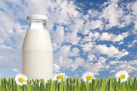 Milk with daisy field and cloudy background photo