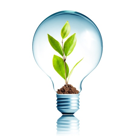 kyoto: Light Bulb with soil and green plant sprout inside
