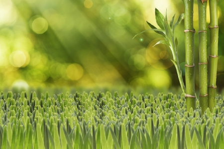 Green Bamboo with fresh green grass on beautiful summer background photo