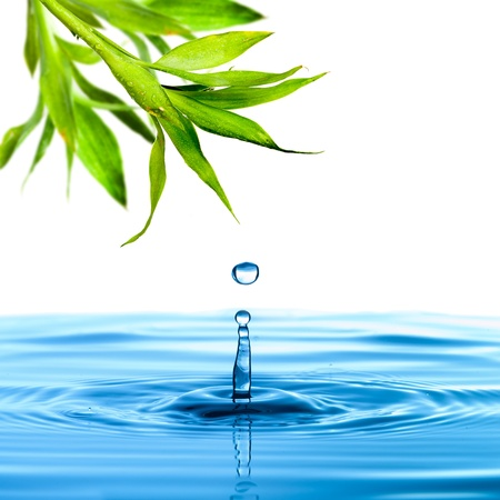 Fresh green bamboo leaf water drop