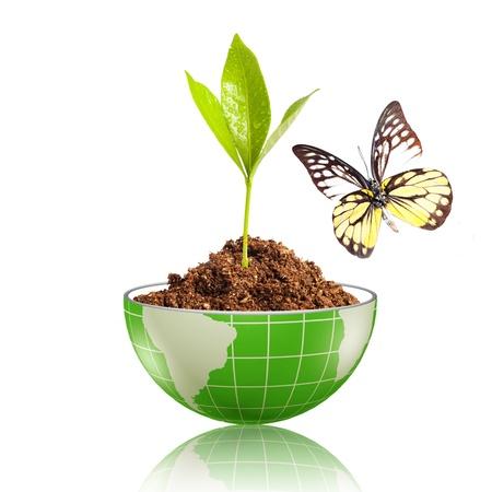 planeta verde: Hoja verde con gota de agua, brillando en el mundo con la suciedad y la mariposa Foto de archivo