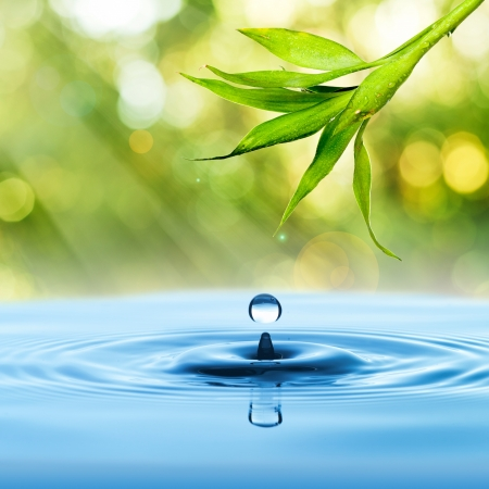 Fresh Green bamboo leaf with water drop on blue water and summer background