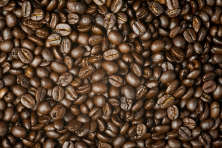 Close up on brown coffee bean photo