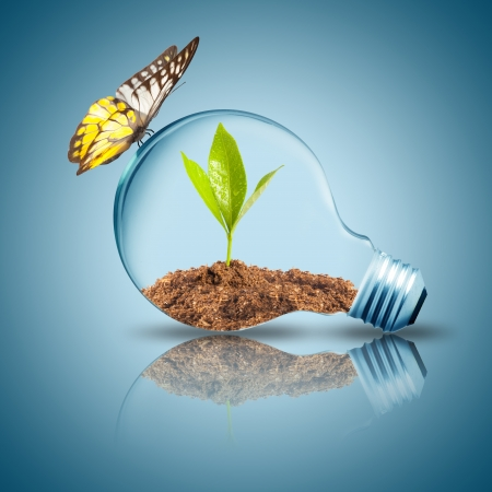 Light bulb with plant inside with butterfly  photo