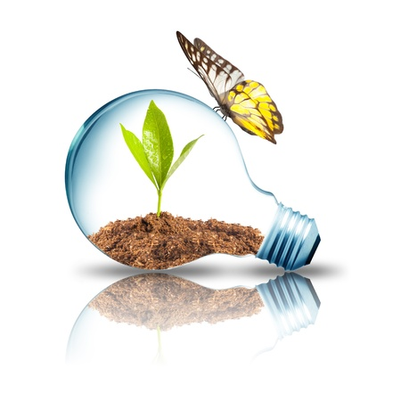 protection concept: Light bulb with plant inside with butterfly