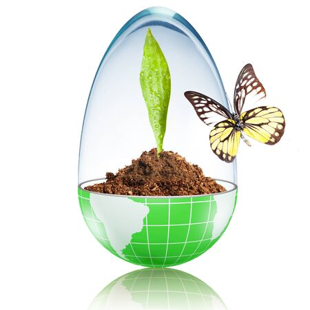 Globe with dirt and green leaf inside and glass cover with butterfly photo
