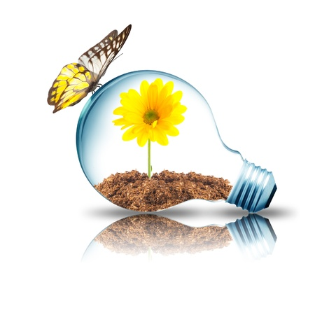 Gloeilamp met gele bloem binnen en vlinder