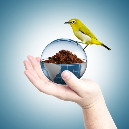Globe cover with glass with dirt inside and yellow bird on top in a man s hand photo