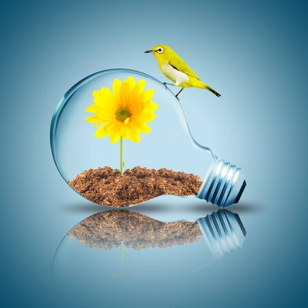Yellow bird on light bulb with yellow sunflower grow inside with dirt photo