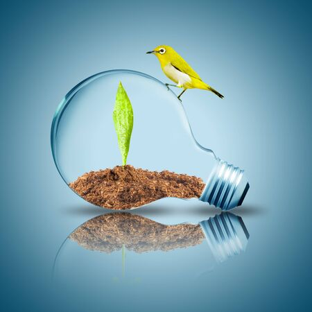Yellow bird on light bulb with plant grow inside with dirt photo