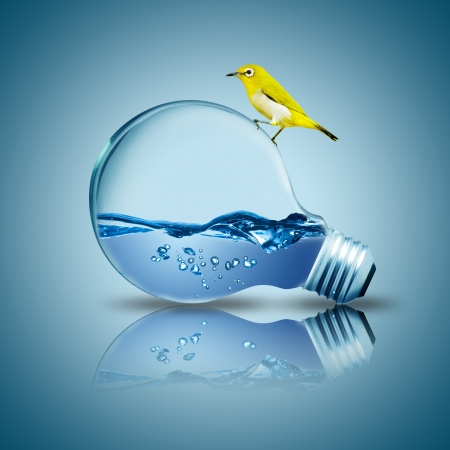water power:  Yellow bird on light bulb with water inside