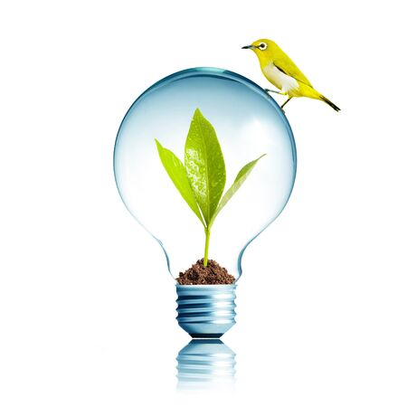 Light Bulb with soil and green leaf inside with yellow bird on top photo