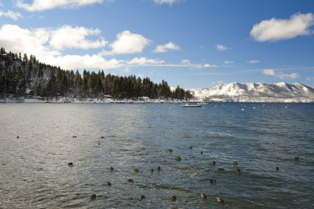 Snow on mountain with bird on the ocean Stock Photo - 15939725