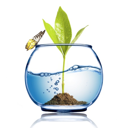 Butterfly on the fish bowl with plant growing inside Stock Photo