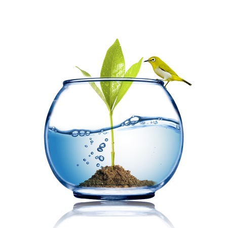 growing inside: Yellow bird on the fish bowl with plant growing inside