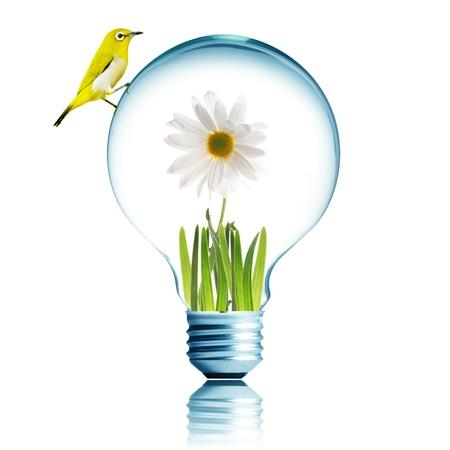 eco innovation: Yellow bird on light bulb with white flower inside  Stock Photo